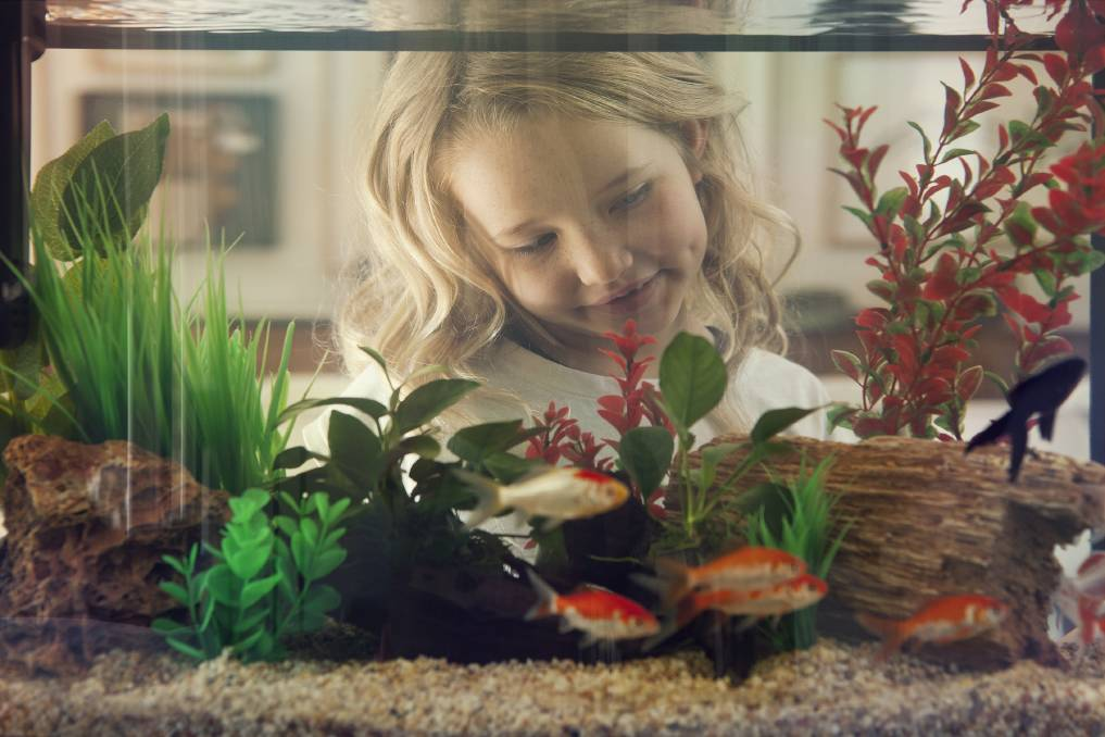 AT HOME AQUARIUM: Veterinarian Dr Aivee Huynh suggests a biofilter, a living life support system full of good bacteria to keep your fish tank healthy. Photo: Petbarn
